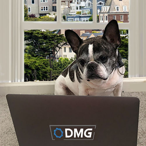 DMGN online training classes